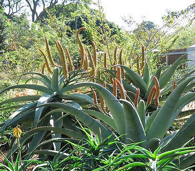 Grassland savanna style garden
