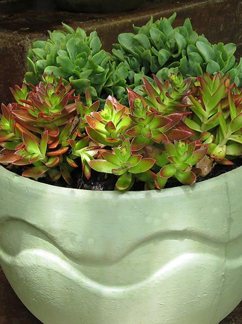 Love how the mint green pots enhances the leaf colours