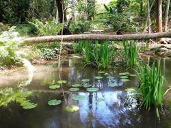 Shallow pond with water lillies