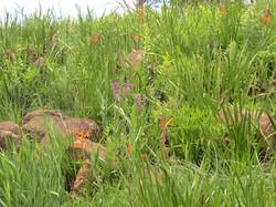 Natural grassland outcrop