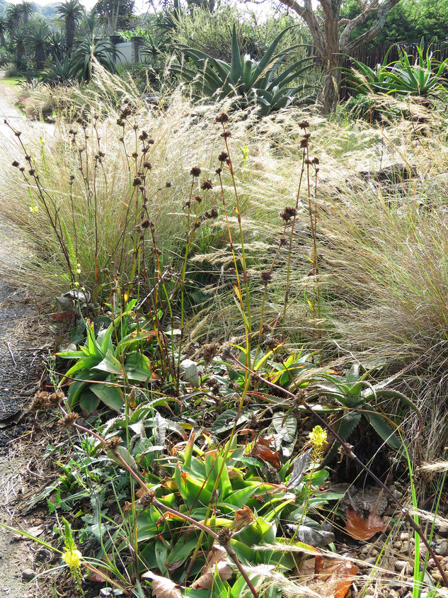 Seed heads and blond grasses