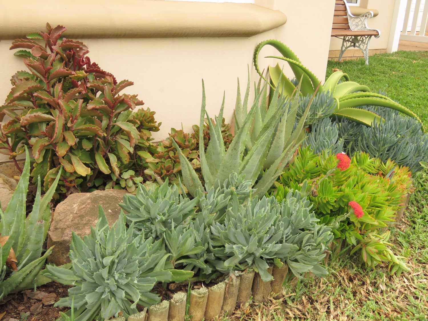 Succulents stand firm