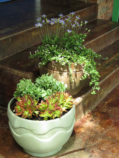 Summer and autumn pots for the stoep