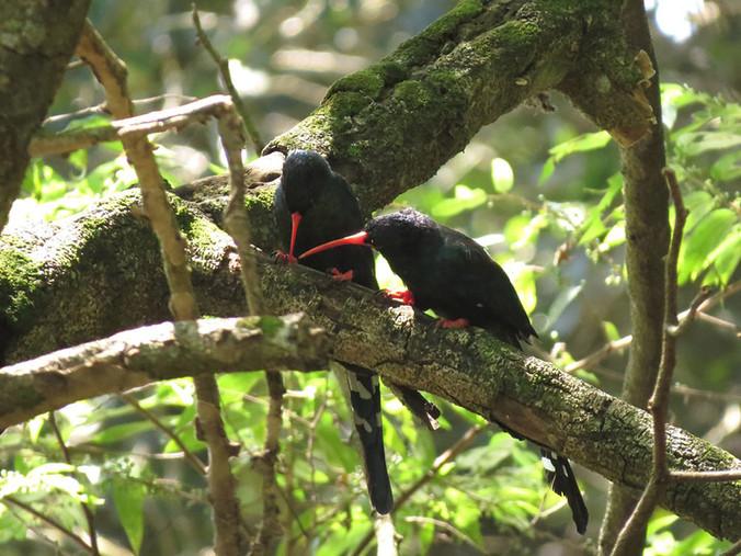 Top 10 Bird Plants