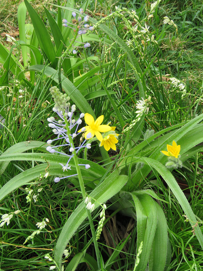 Wildflower Combination