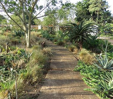 A path through the garden bed