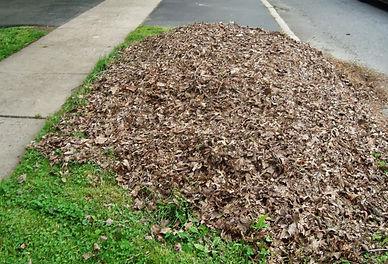 Using winter leaves The Indigenous Gardener