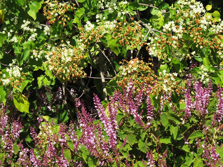 Sun/ shade shrub mix