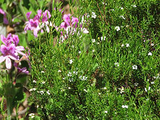 indigenous plants South Africa