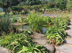 A wildlife pond in a traffic island