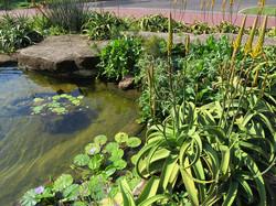 Wildlife pond design