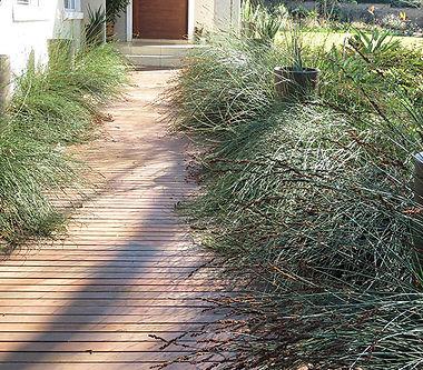 Elegia tectorum along an entrance path