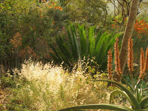 Gorgeous grasses in the late afternoon light