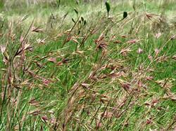 Natural Grasslands