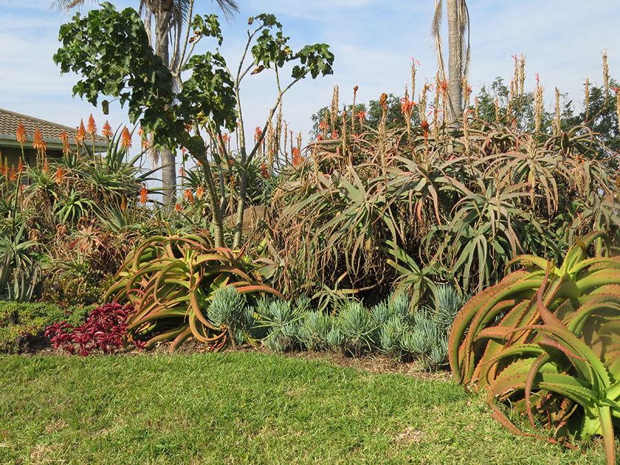 Succulent foliage