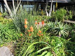 Water-edge plants