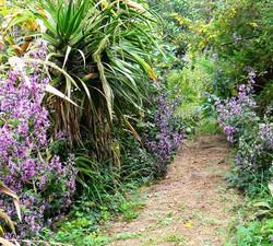 Wild Garden Path