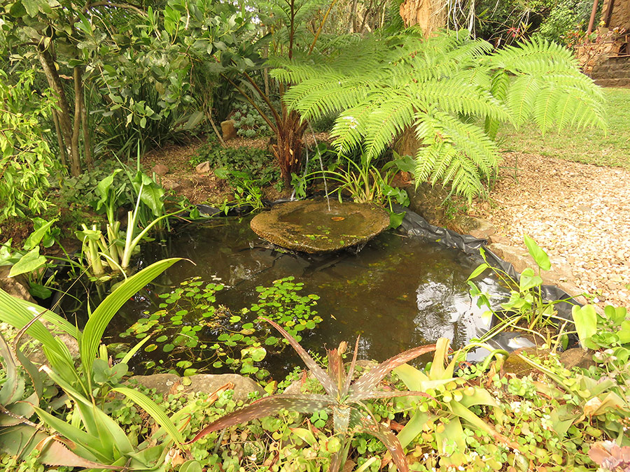 Place the pond where water naturally