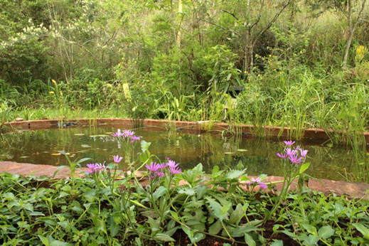 Add a pond not a water feature
