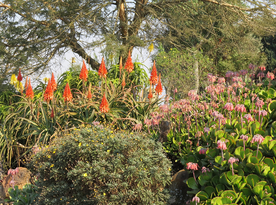 Shrub combo for hot, dry areas