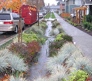 Roadside swales and rain garden