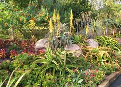 A Succulent Verge