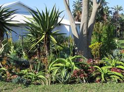 Succulents at the Coast