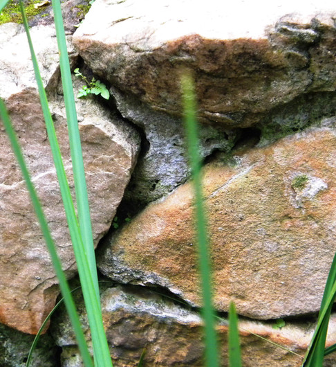 Rock walls provide holes for reptiles
