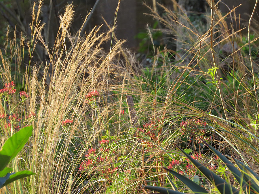 Grasses catch the evening sun