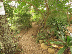 Gravel woodland path