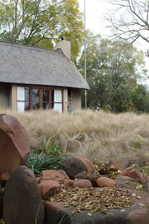 A grass garden in frosty Gauteng