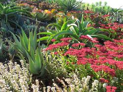 Succulent season