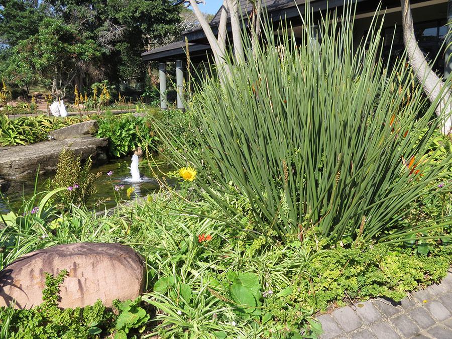 Pond edge plant habitat