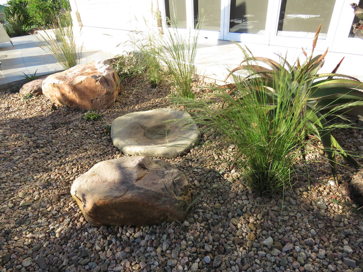 Succulent and rocks off the patio
