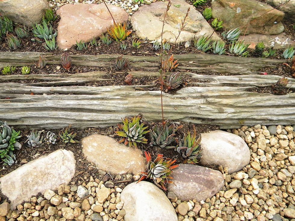Add plants to an old wooden sleeper