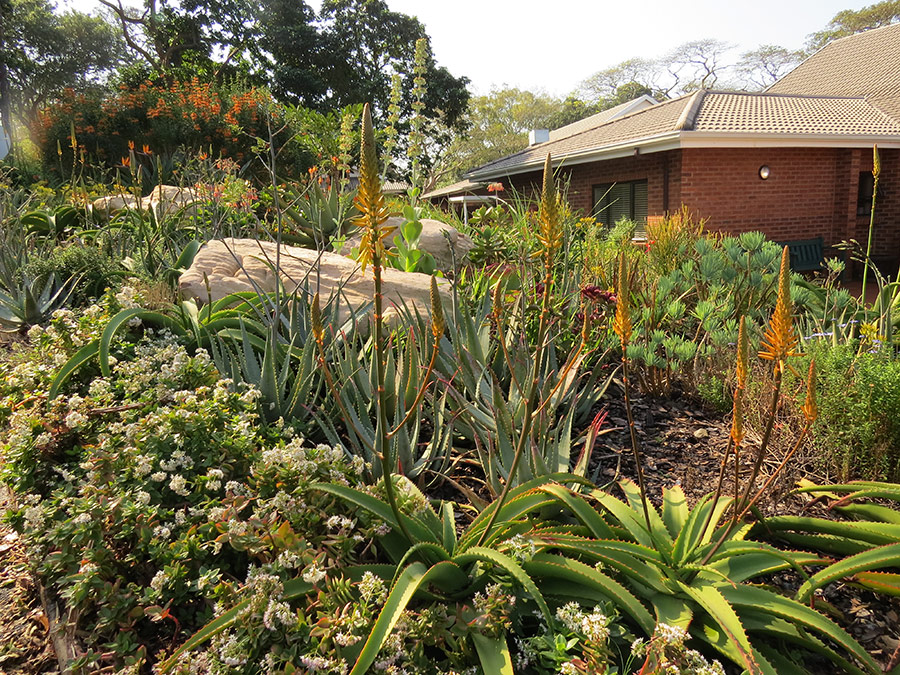 Coastal Gardens - Winter Aloes