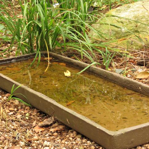 A drip-tray/ bird bath
