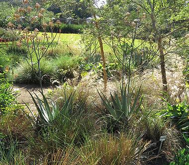 Grassland savanna garden
