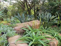 Add textured shrubs
