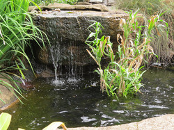 Keep the pond water healthy