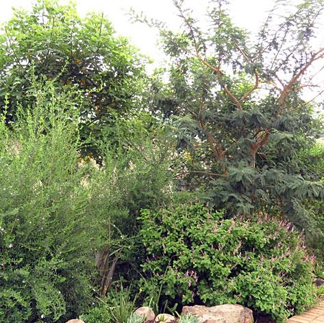 Boundary shrubbery.jpg