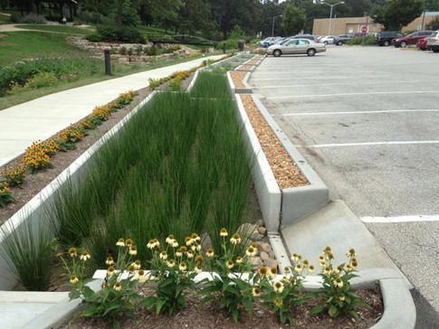 Rain-Garden-Design-Images