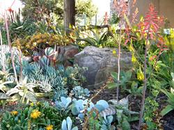 A range of succulent colours