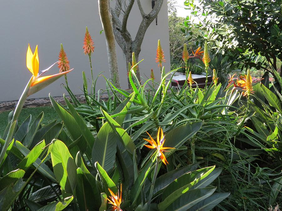 Hot orange shrubs for dappled shade