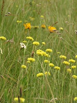Wild grassland meadows