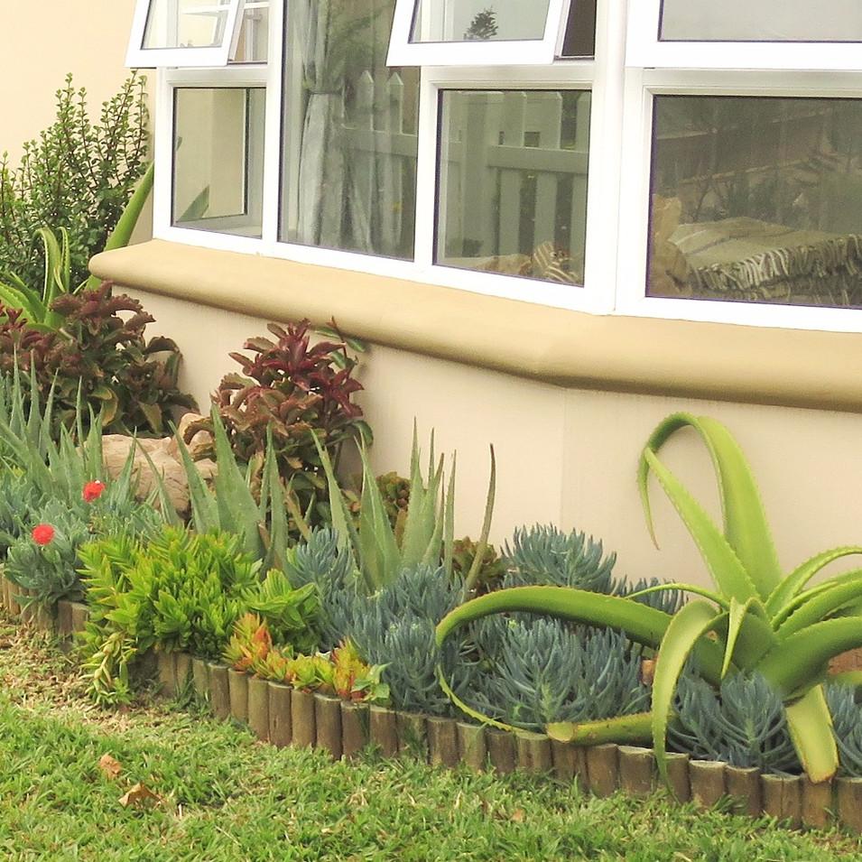 From front: Aloe vanbalenii, Curio crassulifolius, Aloe chabaudii, Crassula capitella, Kleinia fulgens, and Kalanchoe sexangularis