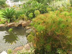 Cyperus are natural pond plants