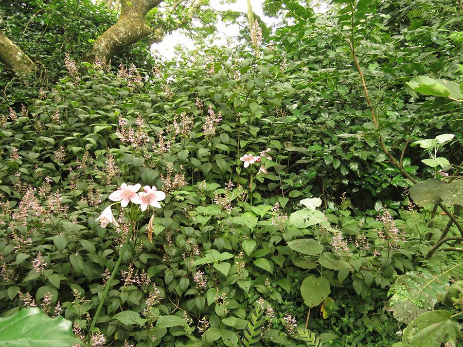 Shade shrubs