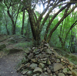 A stone cairn in the Fern Forest