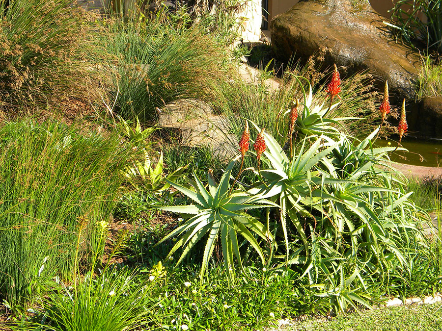 Wild Grass Bank